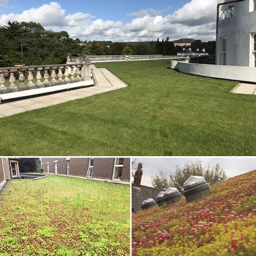 green roofing Bristol